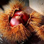 秋の味覚!栗の渋皮煮の簡単な作り方3選と便利な保存方法2つを紹介