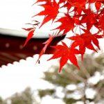京都の紅葉でおすすめのスポットは?見ごろの期間はいつ?